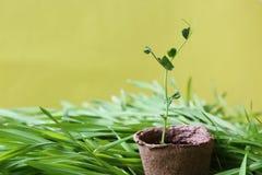 Fundo brilhante verde abstrato ecológico do jardim da mola do oli Imagem de Stock