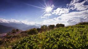 Fundo cênico de colheitas de plantação em Taiwan imagem de stock royalty free
