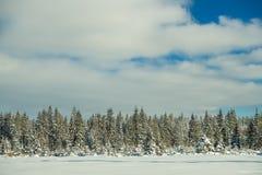 Fundo cênico do inverno imagens de stock royalty free