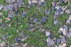 Fundo caído das folhas Foto de Stock