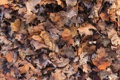 Fundo caído das folhas Fotos de Stock