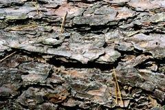 fundo, casca da madeira Fotos de Stock