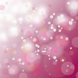 Fundo Cherry Tree Flowers do cartão de Páscoa Fotografia de Stock Royalty Free