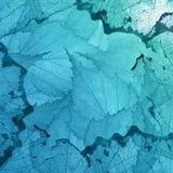 Fundo ciano das folhas transparentes imagens de stock