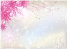 Fundo claro com as flores cor-de-rosa do áster Foto de Stock
