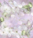 Fundo claro com flores brancas e licença verde em um ramo de árvore Fotos de Stock Royalty Free
