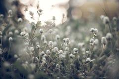 Fundo claro da grama e do sol da flor Fotografia de Stock Royalty Free