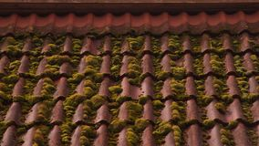 fundo coberto de vegetação da textura do telhado da telha vermelha fotografia de stock