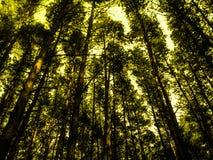 Fundo colorido abstrato da floresta Imagens de Stock Royalty Free