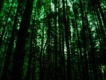 Fundo colorido abstrato da floresta Imagem de Stock