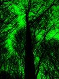 Fundo colorido abstrato da floresta Imagem de Stock Royalty Free