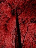 Fundo colorido abstrato da floresta Fotografia de Stock