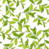Fundo colorido com folhas. Imagens de Stock Royalty Free