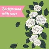 Fundo colorido com rosas brancas Imagens de Stock Royalty Free