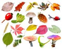 Fundo colorido da coleção das plantas e das bagas Fotos de Stock Royalty Free