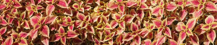 Fundo colorido da flor Fotografia de Stock