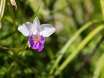 Fundo colorido da flor Imagem de Stock Royalty Free
