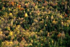 Fundo colorido da floresta Imagens de Stock