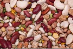 Fundo colorido da leguminosa (feijão) Imagem de Stock