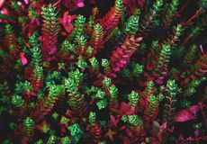 Fundo colorido da planta imagens de stock