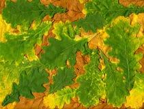 Fundo colorido das folhas de outono amarelas e verdes Fotografia de Stock Royalty Free