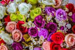 Fundo colorido das rosas Foto de Stock