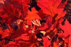 Fundo colorido de Autumn Foliage natural Fundo da natureza imagem de stock