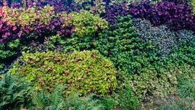 Fundo colorido do canteiro de flores no verão imagem de stock