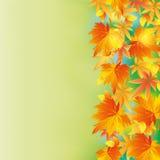 Fundo colorido do outono com queda da folha Imagem de Stock Royalty Free