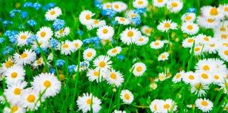 Fundo colorido do verão da natureza do tela panorâmico Imagens de Stock