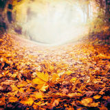 Fundo com as folhas caídas coloridas, natureza da natureza do outono da queda Fotos de Stock Royalty Free