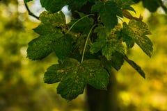 Fundo com as folhas coloridas do outono Foto de Stock