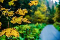 Fundo com as folhas coloridas do outono Fotos de Stock