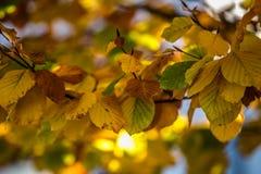 Fundo com as folhas coloridas do outono Imagens de Stock Royalty Free