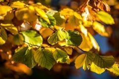 Fundo com as folhas coloridas do outono Fotografia de Stock Royalty Free