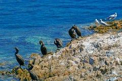 Fundo com as gaivotas na água Fotografia de Stock