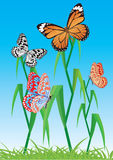 Fundo com borboleta. Vetor. Fotografia de Stock