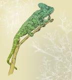 Fundo com camaleão ilustração stock