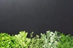 Fundo com ervas frescas Imagem de Stock