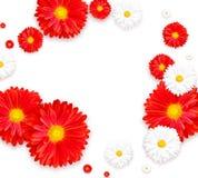 Fundo com a flor colorida bonita Insetos do papel de parede, convite, cartazes, folheto, disconto do comprovante Fotografia de Stock Royalty Free