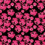 Fundo com flores cor-de-rosa - flor de cerejeira japonesa do dia de Valentim no fundo branco Teste padrão sem emenda Imagem de Stock Royalty Free