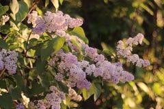 Fundo com flores da mola Foto de Stock Royalty Free