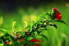 Fundo com flores da mola Imagem de Stock