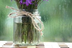 Fundo com flores da mola Fotografia de Stock