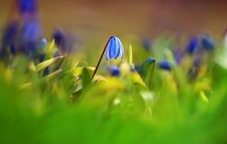 Fundo com flores da mola Imagem de Stock Royalty Free
