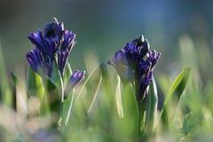 Fundo com flores da mola Fotos de Stock