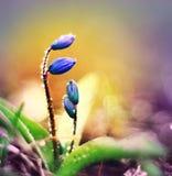 Fundo com flores da mola Imagens de Stock