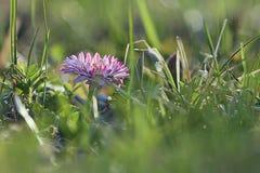 Fundo com flores da mola Imagens de Stock Royalty Free