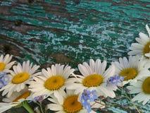 Fundo com flores do verão e madeira velha foto de stock royalty free