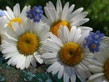 Fundo com flores do verão e madeira velha fotografia de stock